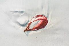 Blätter auf einem sandigen weißen Strand Stockbild