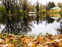 Blätter auf einem Teich Stockbild