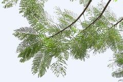 Blätter auf einem weißen Himmelhintergrund Stockfotos