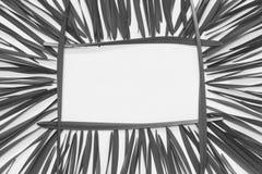 Blätter auf einem weißen Hintergrund mit Raum für Text, Draufsicht Lizenzfreie Stockfotografie