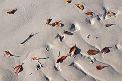 Blätter auf einem weißen sandigen Strand Frazer Island Stockfotografie
