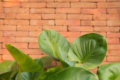 Blätter auf einem Ziegelsteinhintergrund Lizenzfreies Stockfoto