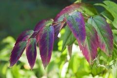 Blätter auf einem Zweig lizenzfreie stockfotos