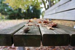 Blätter auf einer Bank Stockbild