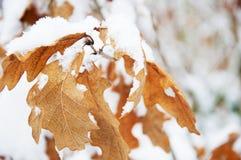 Blätter auf einer Decke des Schnees Stockbild