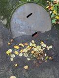 Blätter auf einer konkreten Beschaffenheit Stockbild