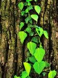 Blätter auf einer Rinde lizenzfreies stockbild