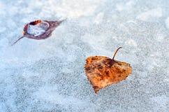 Blätter auf Eis. stockbild