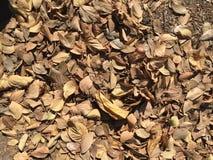 Blätter auf gewachsen stockbild
