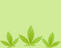 Blätter auf Grün Lizenzfreies Stockbild