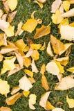 Blätter auf Gras lizenzfreies stockfoto