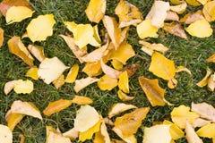 Blätter auf Gras stockfoto