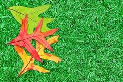 Blätter auf Gras Lizenzfreie Stockbilder