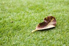 Blätter auf Gras Stockbild