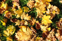 Blätter auf Gras im Fall Stockfotografie
