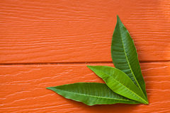 Blätter auf hölzernem Lizenzfreie Stockfotos