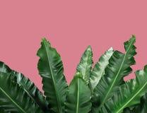 Blätter auf Hintergrundnatur-Sommerkonzept stockbilder