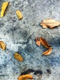 Blätter auf konkretem Boden Stockfoto