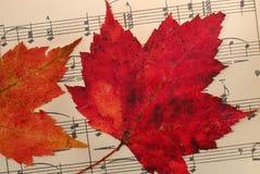 Blätter auf Musik Stockfotos