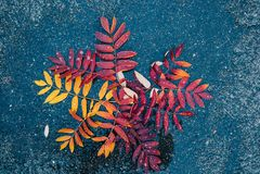 Blätter auf nass Asphalt lizenzfreie stockfotos