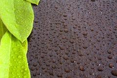 Blätter auf nassem schwarzem wenge Stockbilder