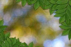 Blätter auf Natur bokeh Hintergrund, Blattrahmen Stockfotografie