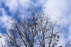 Blätter auf Niederlassungen Stockfoto
