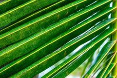 Blätter auf Palmenniederlassung stockbilder