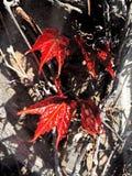 Blätter auf Reben Stockfotos