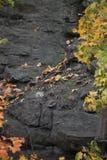 Blätter auf Rocky Cliff Stockbild