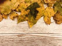 Blätter auf rustikalem Hintergrund lizenzfreie stockfotografie