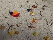Blätter auf Sand Stockfoto
