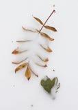 Blätter auf Schnee Stockfoto