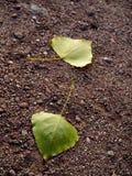 Blätter auf Schotterweg Lizenzfreies Stockfoto