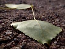 Blätter auf Schotterweg Stockfoto