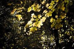 Blätter auf Schwarzem Stockbilder