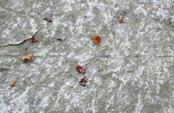Blätter auf Stein Stockfotografie