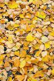 Blätter auf Thstraße stockbild