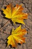 Blätter auf trockenem Boden lizenzfreie stockfotos