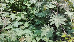 Blätter auf unscharfer Bodenfarbe Lizenzfreie Stockbilder