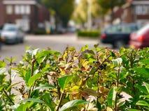 Blätter auf Vordergrund stockbilder