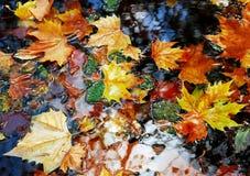 Blätter auf Wasser Lizenzfreie Stockfotografie