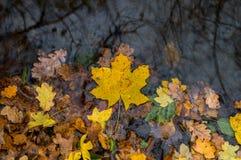 Blätter auf Wasser Lizenzfreie Stockfotos