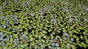 Blätter auf Wasser Stockfotos