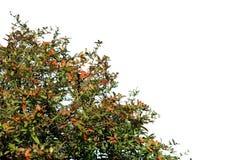 Blätter auf Weiß Stockfoto
