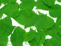 Blätter auf Weiß Stockbilder