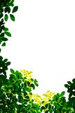 Blätter auf weißem Hintergrund Lizenzfreie Stockfotografie