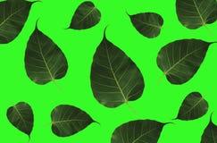 Blätter auf weißem Hintergrund Stockfoto