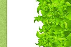 Blätter auf weißem Rahmen Stockbilder