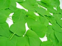 Blätter auf weißer Perspektive Stockfotografie